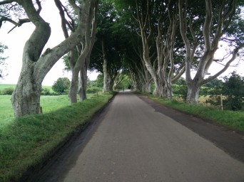 Dark Hedges in real life